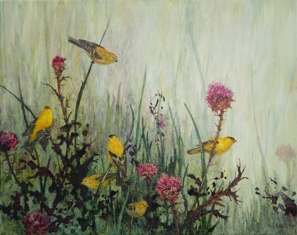 Zittin, Goldfinch and Thistles