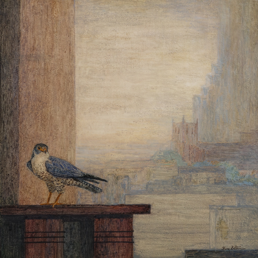 Zittin, Peregrine in the City