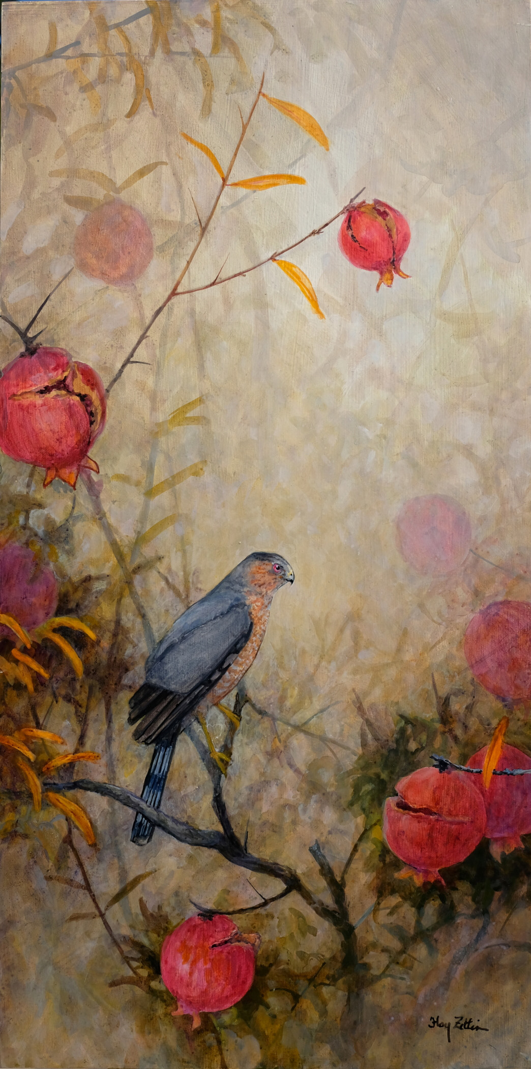 Floy Zittin_Coopers Hawk and Pomegranates